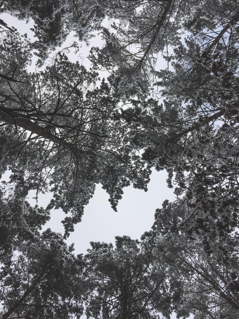 zima-1-8